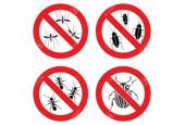 Εντομοπαγίδες